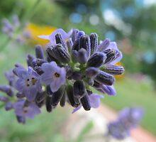 Lavender Sprig by MarianBendeth
