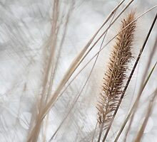 The Grasses Sing Farewell To Winter - Hello Spring by Ann Marie  Barnes