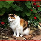 Hahndorf Cat by sedge808
