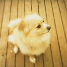 pensive pooch - jelly on the deck by brenda mangalore