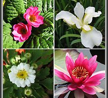 Flower Collage Featuring Deep Pink and White Flowers by BlueMoonRose