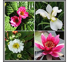 Flower Collage Featuring Deep Pink and White Flowers Photographic Print