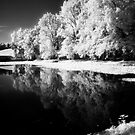 Reflections in Pond by Ethem Kelleci