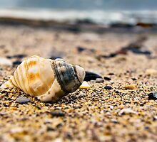 Shell on the pebble beach by Richard Keech