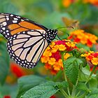 Royal Butterfly by Shelley Neff
