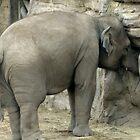 elephant by BabyM2