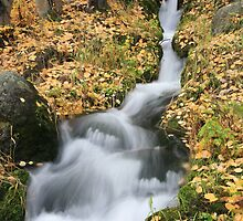 Fall in Boulder Brook - RMNP by Teresa Smith