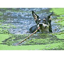 Playing Fetch Photographic Print