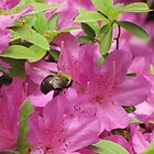 Busy Bee in Pink - flowers by Hope Grover
