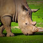 Rhino  by Robyn Maynard