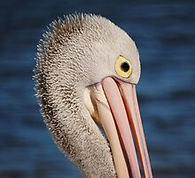Pelican Portrait >> by JuliaWright