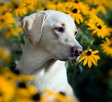 Miss daisy by Jacky Parker