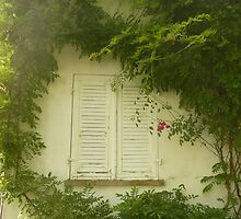 Natural window - Lake of Constance, Germany by smambrosius