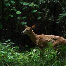 Whispering Woods by Jamie Lee