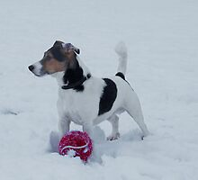 Snow Dog by Paul  Gibb