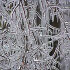 iced tree by Robyn Wilkey