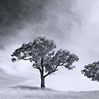 Trees by garts