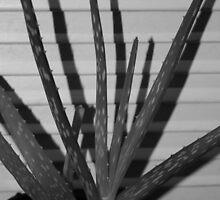 Aloe Vera by Cathy O. Lewis