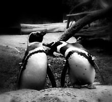 Penguin Love by Rebecca Swayze