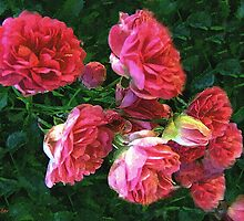 Roses Roses by RC deWinter