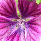 Purple Flower by Kirsty Auld