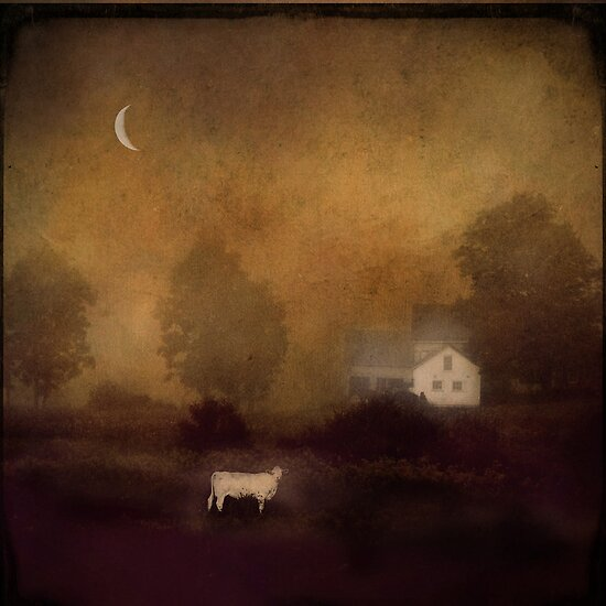 ...just before dawn, a cow... by dawne polis
