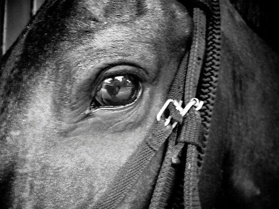 Black horse face close up - photo#2
