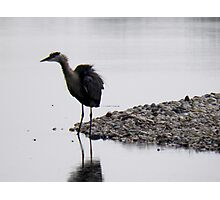 bad feather day? Photographic Print