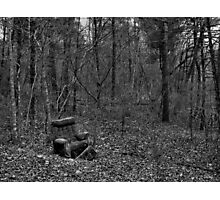 Wooded Comfort Photographic Print