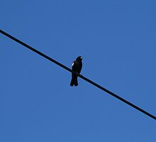 Bird on a Wire by Tammy F