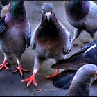 HD Pigeons by sedge808