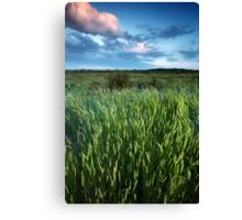 Blakeney Grass Canvas Print