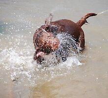 splash by emanon
