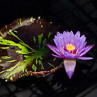 Water lily and leaf by Lorraine Parramore