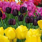 Spring Tulips by Lizzylocket