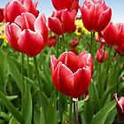 Red Tulips 1 by Lizzylocket