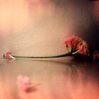 pink satin by karin  taylor