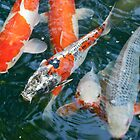 nishikigoi  [japanese carp] by Caprice Sobels