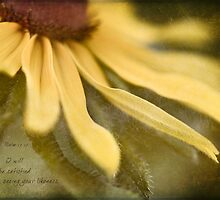 Black-Eyed Susan by JulieLegg