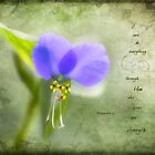 Wild Spiderwort by JulieLegg