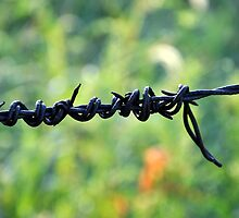 barbed wire by patticake