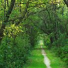 A Canopy of Green by lorilee