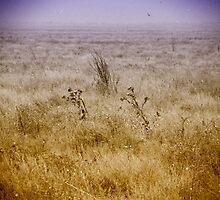 Ukrainian steppe. by Olexandr Prokopchenko