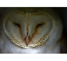 Barn Owl #1 Photographic Print
