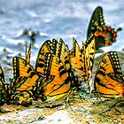Butterfly Beach Party by Monte Morton