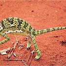  &quot;TRAP SUUTJIES&quot;!....(Verkleurmannetjie)FLAP-NECK CAMELEON   Chameleon dilepts by Magaret Meintjes