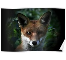 Straight Down The Barrel - [Red Fox - None Captive] Poster
