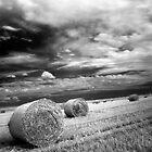 Rolling Hays  by Ethem Kelleci