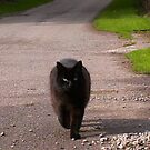 A cat met me on my travels by Jan Carlton
