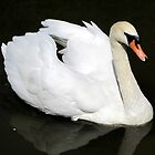 swan I by Leeanne Middleton